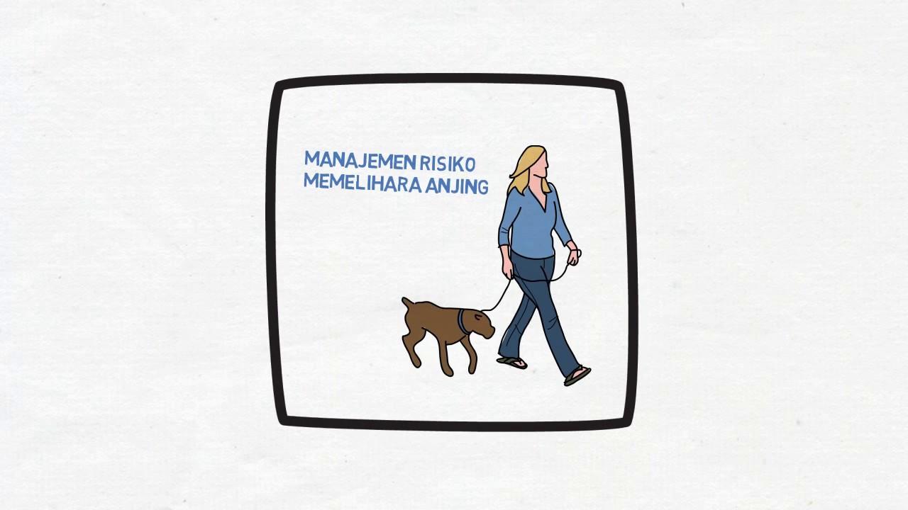 Manajemen Risiko Memelihara Anjing Youtube