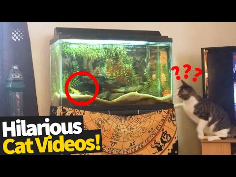 Funny Viral Cat Videos | Ultimate Cat Compilation 2019