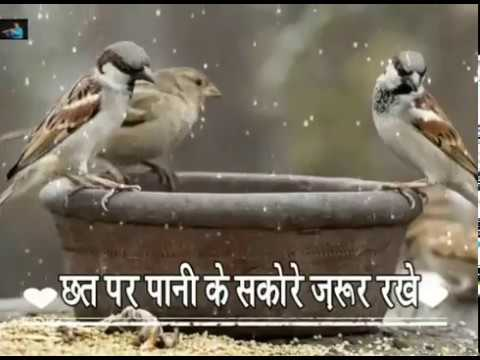 Save Animals save earth-Please don't waste water... Jal hi jeevan hai 🙏