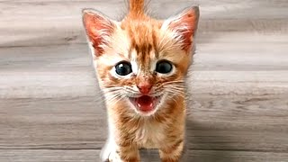 BEST CAT VIDEOS OF THE WEEK! Funny and Cute Cat Videos