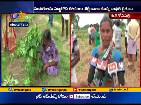 Unknown Persons   Cotton Crop Extractions in 7 Acres at Edugonipally   Gadwal Dist