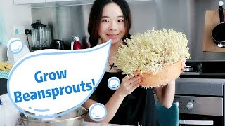 Grow Beansprouts At Home From Seed! [Simple & Fast!]