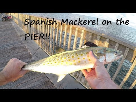 Catching Spanish Mackerel On The Gulf Shores State Pier - The Pier Life Series Part 1