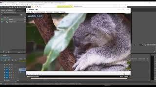 Сделать цикличное видео в Premiere Pro, Media Encoder, After Effects  Loop video