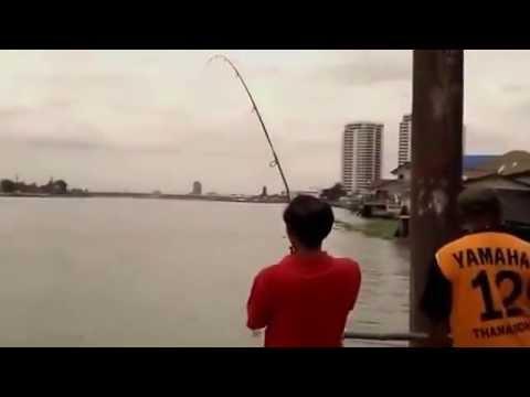 [FISHING] Câu Cá Tra Sông - Dòng Cá Tự Nhiên Đã Tay Cực