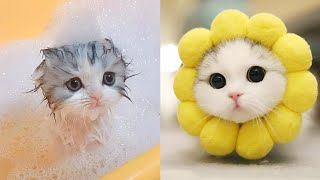 TikTok - Cute and Funny Dog and cat Videos Compilation #15    Koko animals