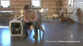 Puppy Training - Potty Training