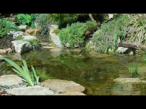 Secrets to clear water ponds