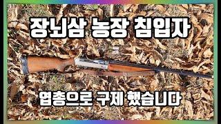 [철기TV] 장뇌삼 농장을 구제하라