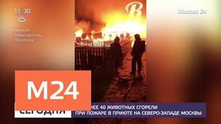 Животных из сгоревшего приюта перевезли в другие вольеры - Москва 24