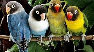 Pájaros Exóticos (Especies de Loros)