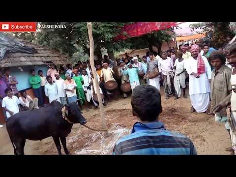 Sohrai khuntaw 2017 || Santali Video ||