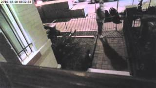 LiveLeak - DC Porch Pirate Spots Camera, Comes Back With EPIC Disguise