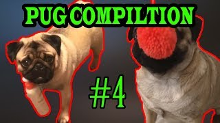 Best of the pug pug compilation 2018 #4 by Viral dogs