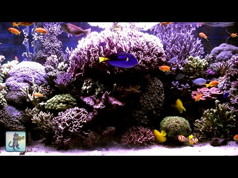3 HOURS of Beautiful Coral Reef Fish, Relaxing Ocean Fish, Aquarium Fish Tank & Relax Music 1080p #2