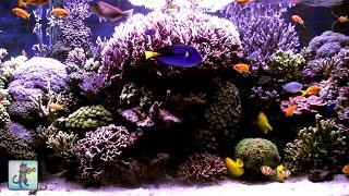 3 HOURS of Beautiful Coral Reef Fish, Relaxing Ocean Fish, Aquarium Fish Tank & Relax Music 1080p #2