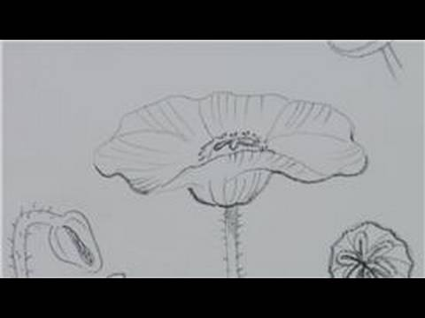 Drawing lessons how to draw poppies youtube mightylinksfo