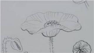Drawing Lessons : How to Draw Poppies