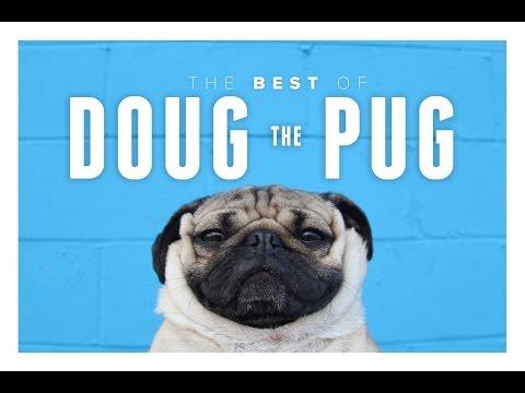 Best of Doug the Pug