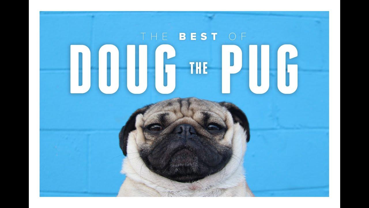 The best pug accounts to follow on instagram doug the pug m4hsunfo