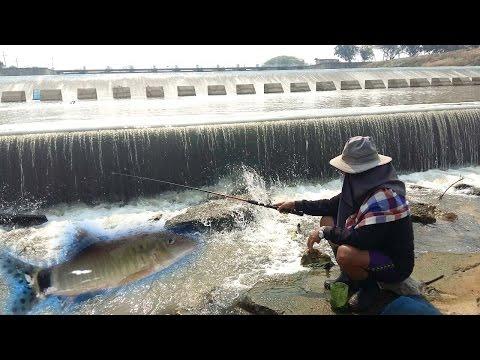 ตกเบ็ดปลาหมู แม่น้ำกกเชียงราย BYลุงเด่น