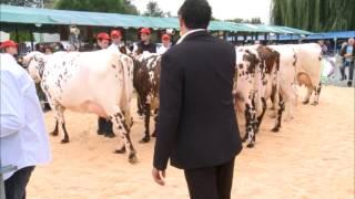 Normande poitevine - Salon de l'élevage Surgeres 2012