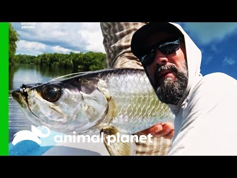 Fishermen Catch Over 100 Tarpon During Trip To Mexico | Fish or Die