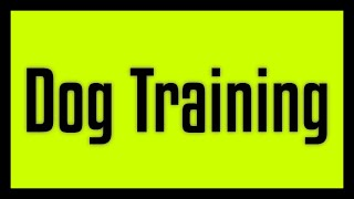 How to Educate a Dog - Simple and Effective