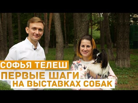 Первые шаги на выставках собак: об эмоциях, отношении к выставкам, занятиях - хендлер Софья Телеш