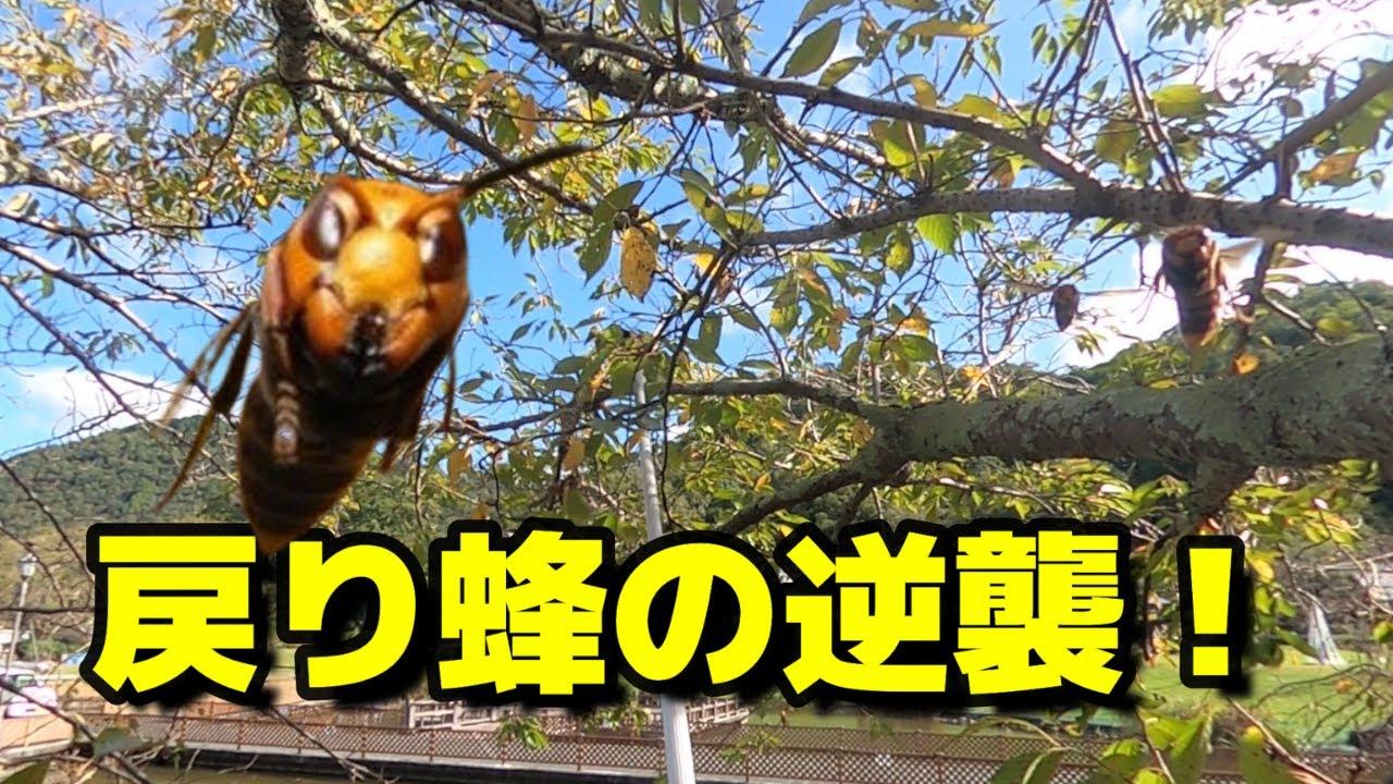 【戻り蜂の逆襲】池の上に作ったコガタスズメバチの巣を撤去。滋賀竜王町のハチ駆除「ジェイ・ワークス」