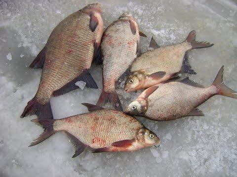 Зимняя рыбалка. Ловля леща на поплавок.