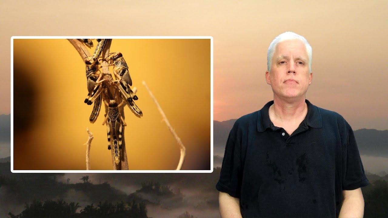 A Biblical Plague Of Locusts - ShockCast Shorts - YouTube