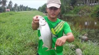 Memancing Bulan/ Tarpon di Perak