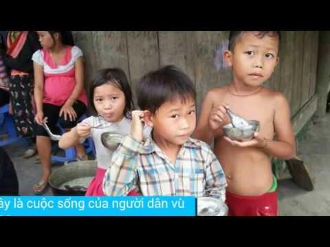 Hoa Ban Red - hái và ăn quả rừng ( mắc sim - chí khấu )
