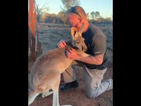Our Loving Kangaroo Queen Abi