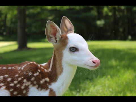 سبحان الله معجزة تأثير إسم الله على الحيوانات للذبح