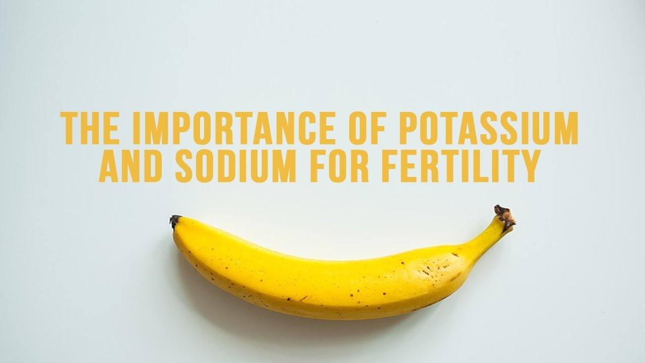 an essay on potassium and its importance For two centuries certain potassium salts have been employed as diuretics in  clinical  barker emphasized the importance of giving a diet in which the sodium   of intravenous injection of inorganic chlorides on the composition of the blood .