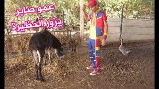 عمو صابر في الحظيرة - Amo saber visiting the barn