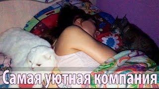 видео Белый кот во сне. Как понять, если приснился белый кот?