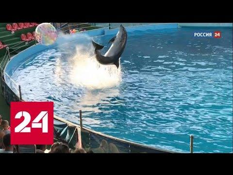 """""""Слезы дельфина"""". Смотрите в выходные новое расследование Эдуарда Петрова - Россия 24"""