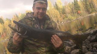 Рибалка в Карелії. Ловля лосося на спінінг. Fishing in Karelia. Salmon fishing spinning