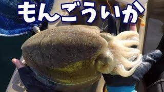 釣ったモンゴウイカをお刺身にしたよ