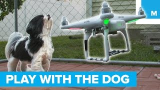 This Drone Will Play With Your Dog