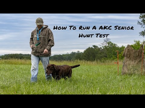 How To Run A AKC Senior Hunt Test