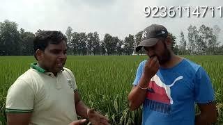 इंग्लैंड से किया MBA स्वदेश आकर कर रहे हैं जैविक खेती देखिए धान की खेती जैविक विधि से9236114711