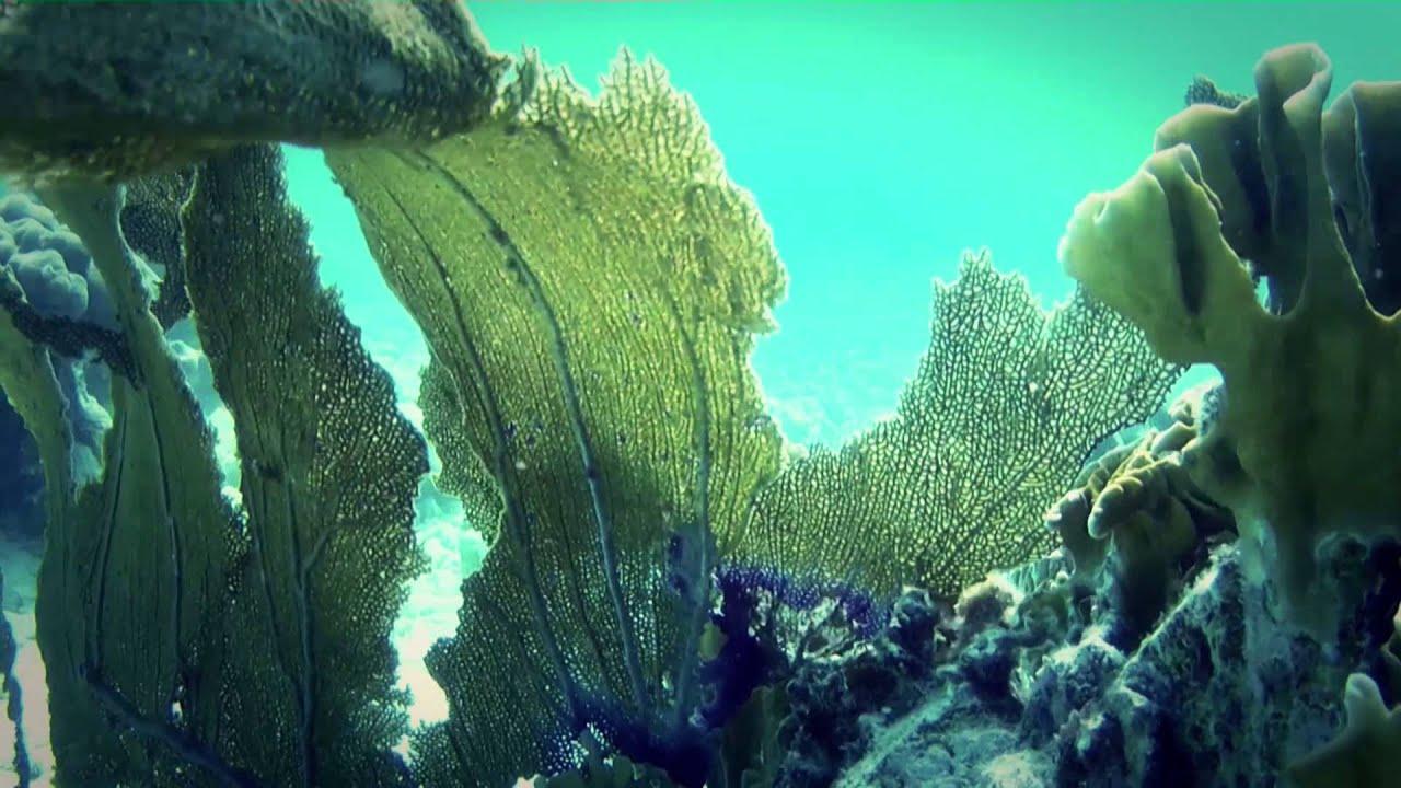 #2422, Arrecife algas corales y vida marina con corriente ...