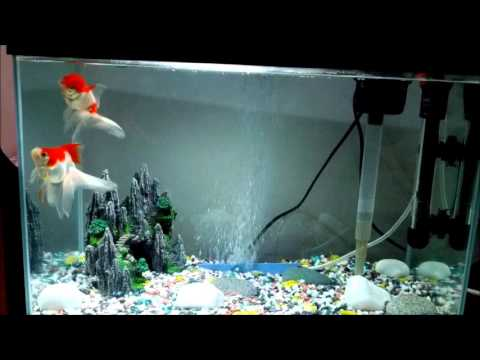 My goldfish in 10 gallon tank nora and arnie youtube for 10 gallon koi tank