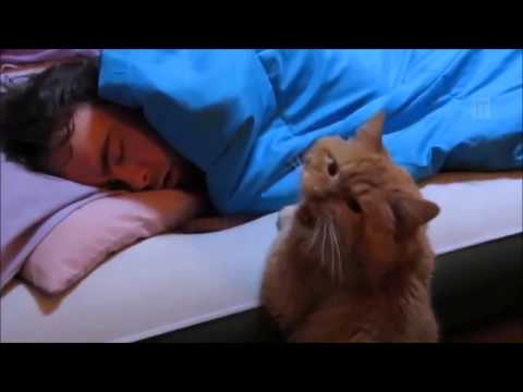 Cats Can Be Jerks - Funny Cat Compilation