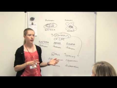 Bacterial Nomenclature   Genus and Species