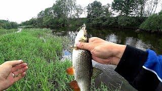 Рыбалка на голавля Спиннинг Малая река